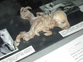 Deformed Animals