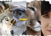 Proyecto Animalidad
