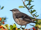 The state Mockingbird