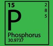 Element of Phosphorus