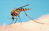 what causes malaria ?