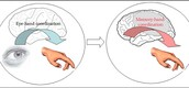 Hand-eye coordination changes to hand-memory coordination