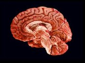 A Big Brain