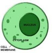 What is the purpose of the Organelle?