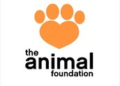 Join The Best Animal Foundation