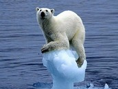 A Polar Bear on a small piece of Ice