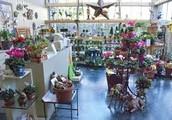Beanstalk Greenhouse !