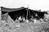 מקום המגורים של הבדואים - אוהלים.
