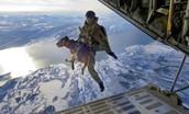 Airborne Dog Training