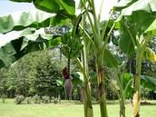 40,000 plant species