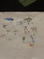 This is my food web