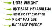 Fats for Fuel