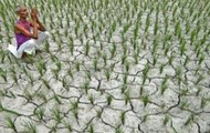 Poor Farmers Cannot take Part in GM crops