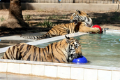 Baghdad zoo