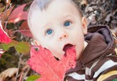 Now booking Fall 2013 Mini Sessions