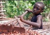 A child raking cocoa beans