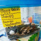 We are observing crickets!