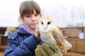 By:Malea Stoner             How we are protecting owls from being killed