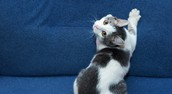 Waarom krabben katten aan meubels?