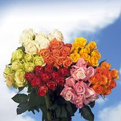Win 500 Roses this Mother's Day from Global Rose