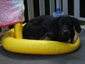 my dog Dakota