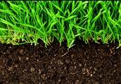 Vegetation and Soil