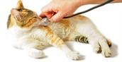Onderzoek kat