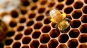 Bee Hive Latte