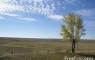 Few trees