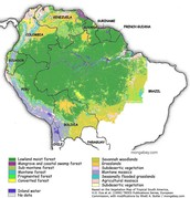 What is the Amazon Rainforest?