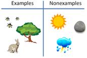 Characteristics of an Ecosystem