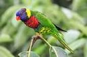 Parrots/Loros