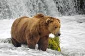 Zwierzęta żyjące w parkach narodowych