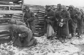 Nazi Persecution of Soviet Prisoners of War