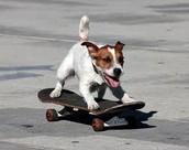 J'adore skateboarding