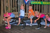 Wrestling the gator!!