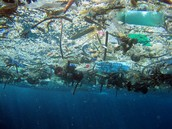 What Is Marine Debris ?