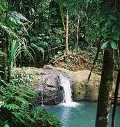 fiji rain forest