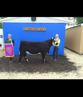 2015 overall Grand Champion Heifer