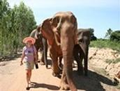 Conservación  y Rescate de Elefantes