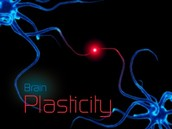 Structural Plasticity and what it means for Educators