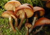Free Polish Mushrooms