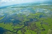 Wet Lands