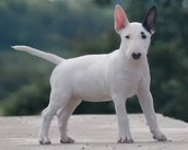 favirote dog