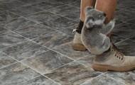 What do koalas do?
