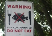Fish are being contaminated
