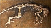 The Fossil of a Dinosaur
