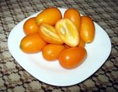 ╚ Learn my ways, little Kumquat. ╝