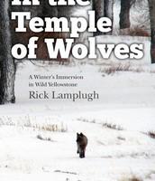 Rick Lampugh