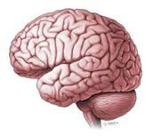 Opdracht 1: Hersenscan (10 minuten)